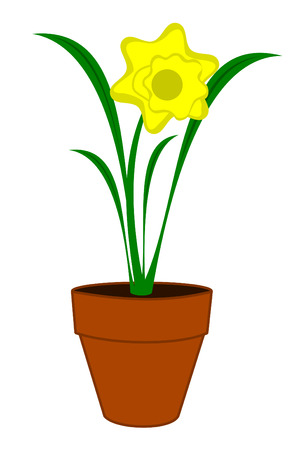 A yellow Daffodil flower in a pot