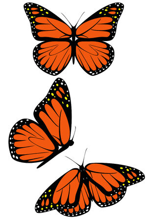 A set of three monarch butterflies Illustration