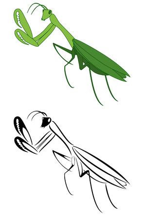 mantis: A set of two pray mantis Illustration