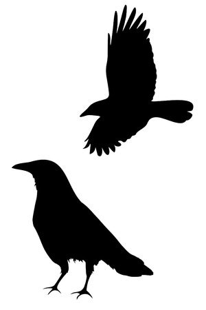 A set of two crow silhouettes