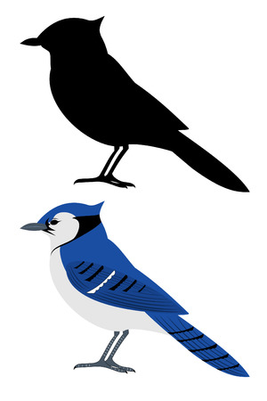 A set of two bluejay birds