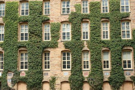 プリンストン大学のキヅタ壁 写真素材