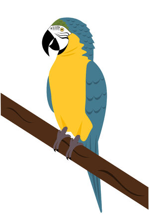 A Blue and yellow Macaw Parrot
