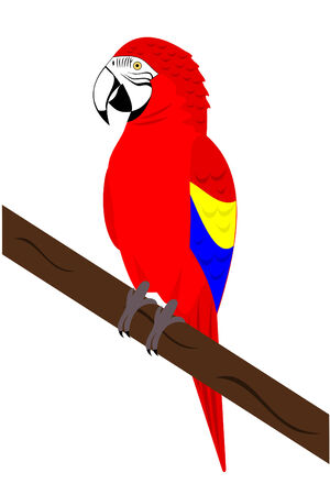 A Red Macaw Parrot