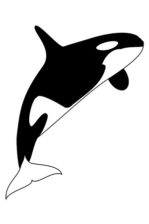A black and white killer whale Illustration