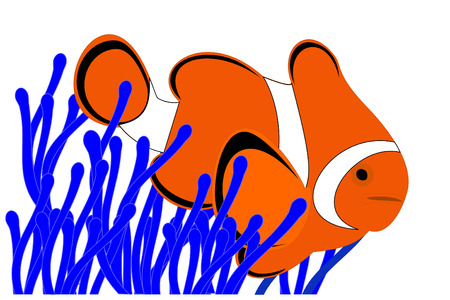 A clown fish in a blue anemone Illustration