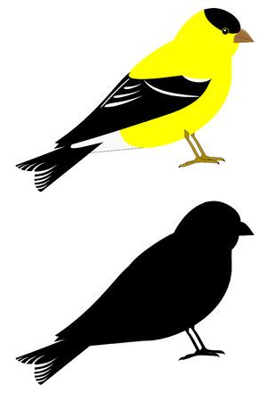 finch: A eastern goldfinch set Illustration