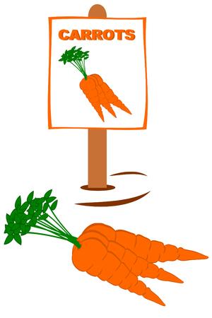 Verse trok wortelen met tuin tekenen Stock Illustratie