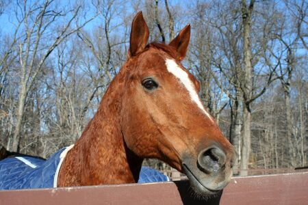 A close up of a horses head