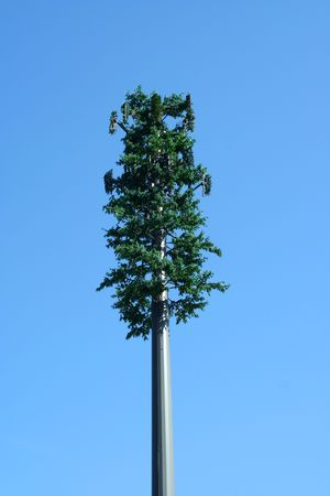 A Tree cell phone tower
