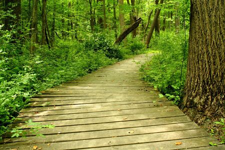 bridge forest: A Wooden bridge in the woods Stock Photo