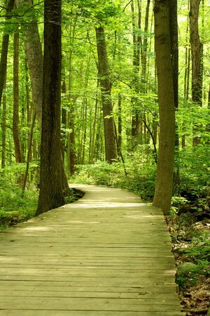 A Wooden bridge in the woods Stock Photo