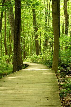 Een houten brug in het bos