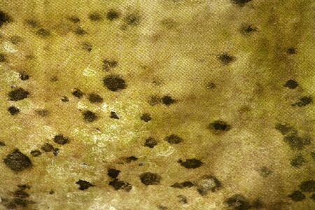 A Moldy tarp backround texture