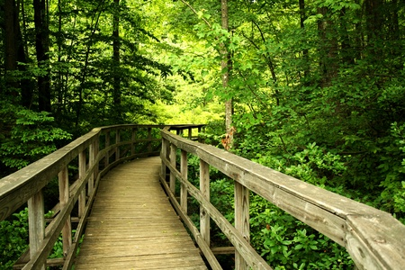 a Wooden bridge through the forest Stock Photo