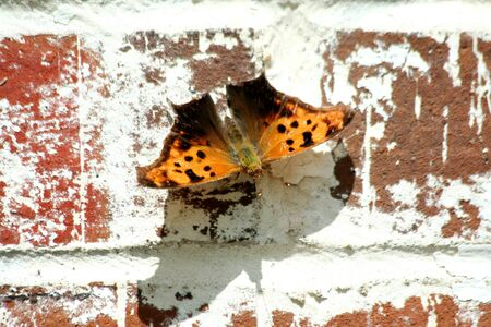 Butterfly on a brick wall Stock Photo - 13558423