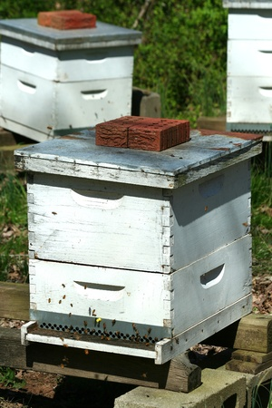 A image of a beehive colony