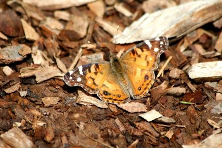 地面に蝶の日光浴 写真素材
