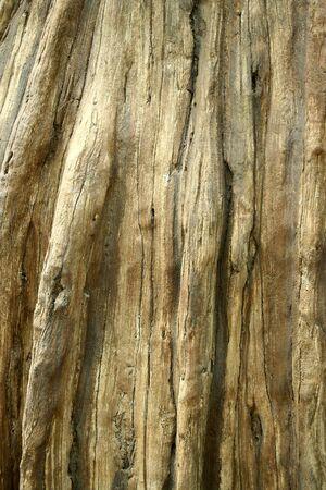 死んだ木トランクの背景画像 写真素材 - 14511146