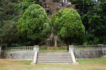 木といくつかの石段