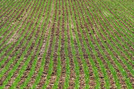 草原の緑行 写真素材 - 14992367
