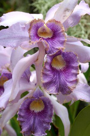 色鮮やかな蘭をクローズ アップ画像 写真素材 - 14992363