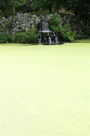 覆われた藻類池の滝