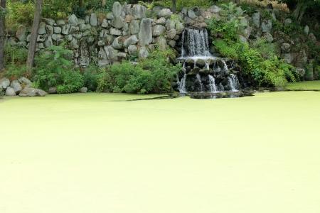 覆われている藻の池の滝 写真素材 - 20011149