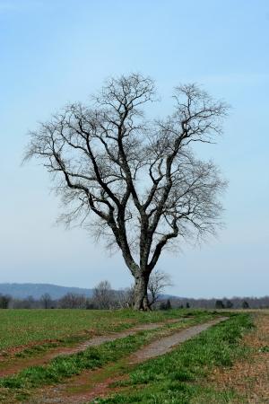 フィールドのローンスター木 写真素材 - 20011142