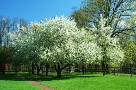 春の木草と青空 写真素材 - 20011127