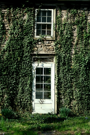 A Ivy covered door and window