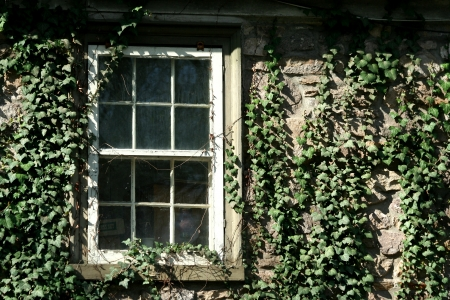 A Ivy covered window image
