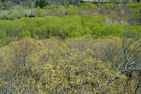 Top view of Spring tree tops