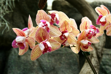 Colorful orchids close up image