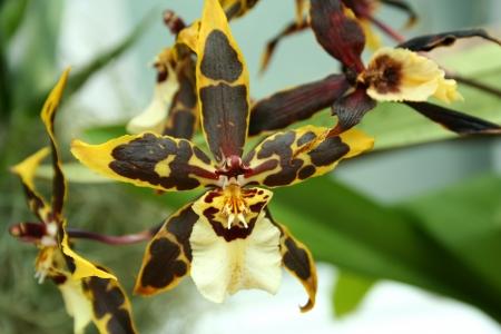 色鮮やかな蘭をクローズ アップ画像