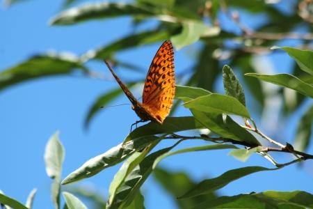 木の枝に蝶します。