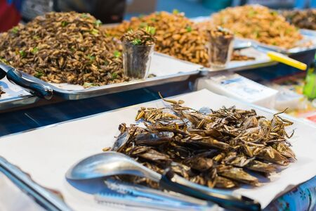 cricket insect: fried insects at the local market in Chiang Mai, Thailand.
