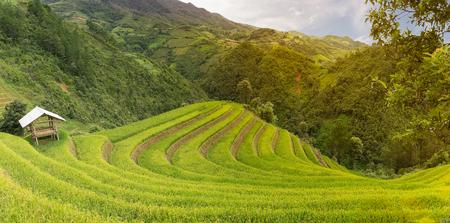 chai: Mu Chang Chai rice terraced