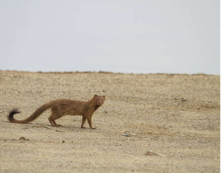 mongoose: Mongoose