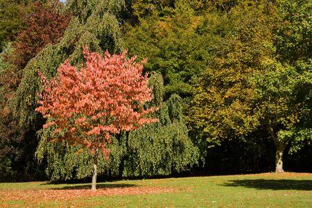 Autumn scene in the park Stock Photo