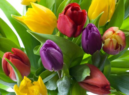 Bouquet of brightly colored spring flowers Stock Photo