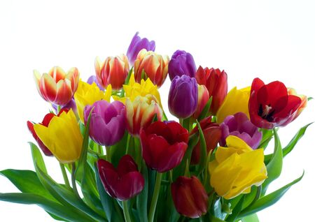 Bouquet of springtime tulips on white