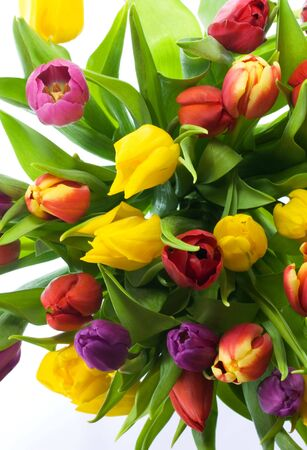 Looking down on brightly colored tulips