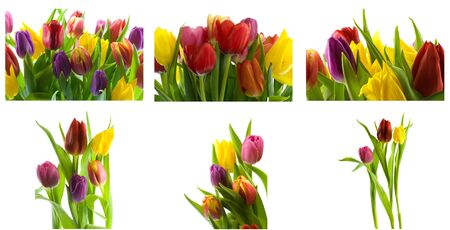 Collage of colorful spring tulips photo
