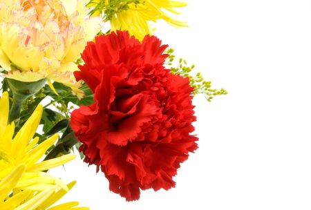 Red carnation with white copy space Stock Photo