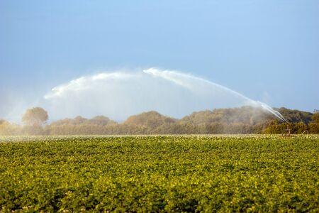 Agricultural water gun in cropfields in summer