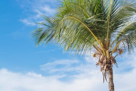 concep: coconut tree on  beach,summer vacation concep