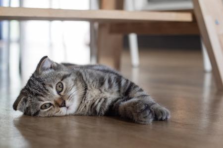 kitten: cat kitten sleep on wood floor under wood table