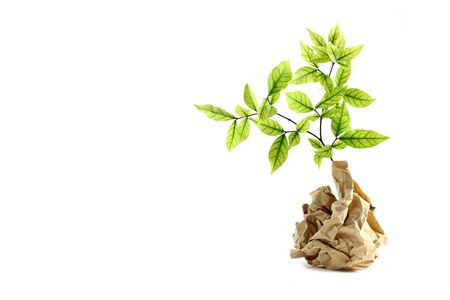 Ecology concept. small plant in recycled paper on white background Stock Photo - 13738791