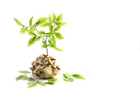 Ecology concept. small plant in recycled paper on white background  Stock Photo - 13738793